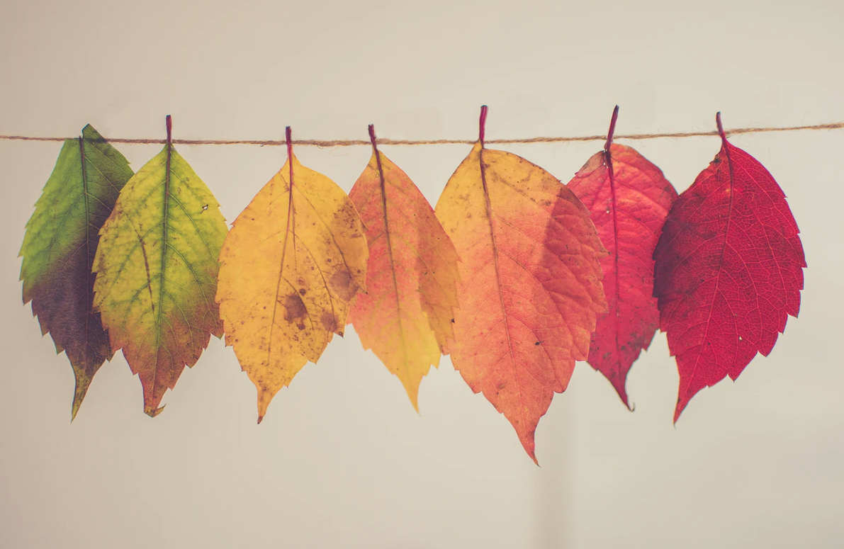 colored leaves hanging out to dry