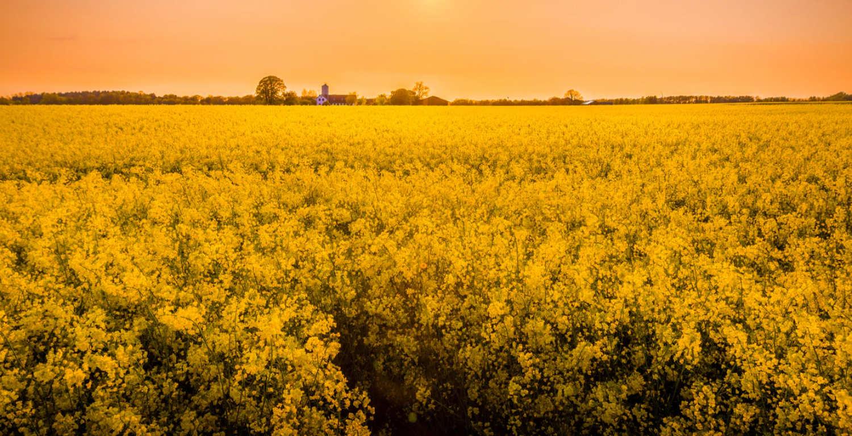 field of flowers in a field