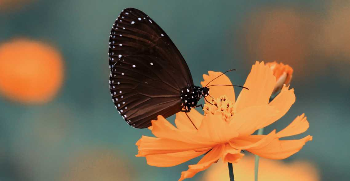 butterfly peacefully sitting on a yellow flower